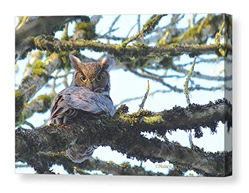 Great Horned Owl Photo on CANVAS Beautiful Bird Art Print for Home or Office Rustic Nature Photography Ready to Hang 8x10 8x12 11x14 12x18 16x20 16x24