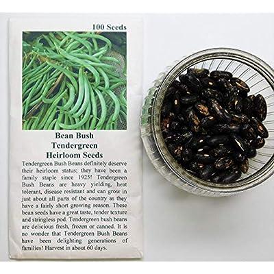 David's Garden Seeds Bean Bush Tendergreen SL8I71 (Green) 100 Non-GMO, Heirloom Seeds : Garden & Outdoor
