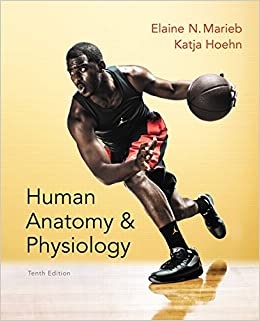 Human anatomy physiology 10th edition elaine n marieb katja n human anatomy physiology 10th edition elaine n marieb katja n hoehn 9780321927040 anatomy amazon canada fandeluxe Gallery