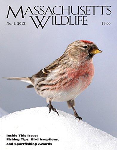 Subscribe to Massachusetts Wildlife Magazine