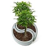 Sundlight Succulent Plants Silicone Molds Concrete Composite Flowerpot Molds for Home Garden Decor