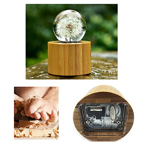 Mylifestyle Musical Box Real Specimens Dandelion Ball with Wood Base Music Box Gift for Christmas/Birthday/Valentine's Day,(Melody Happy Birthday to You) by Mylifestyle (Image #6)