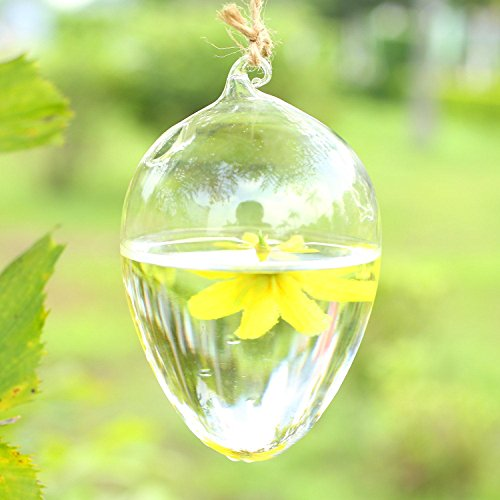 Soledi Hanging Round Egg Glass Clear Flower Vase Hydroponic Container Home Decor