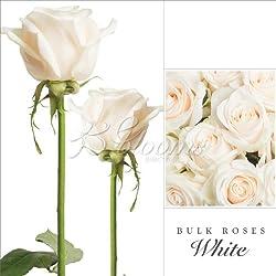 Fresh Cut Bulk Roses - Short (WHITE) for Valentine's Day