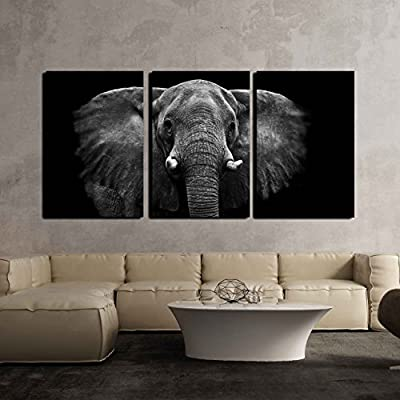 Magnificent Elephant On Black Background - 3 Panel Canvas Art