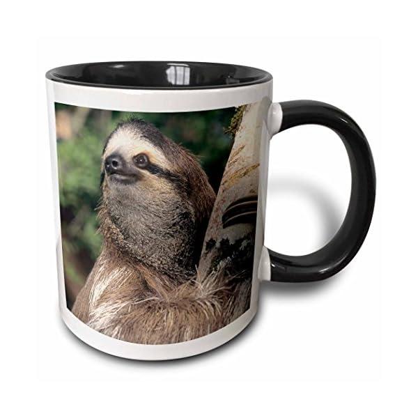 3Drose 87216_4&Quot;Three-Toed Sloth Wildlife, Costa Rica-Sa22 Ksc0126-Kevin Schafer Two Tone Mug, 11 Oz, Black/White -