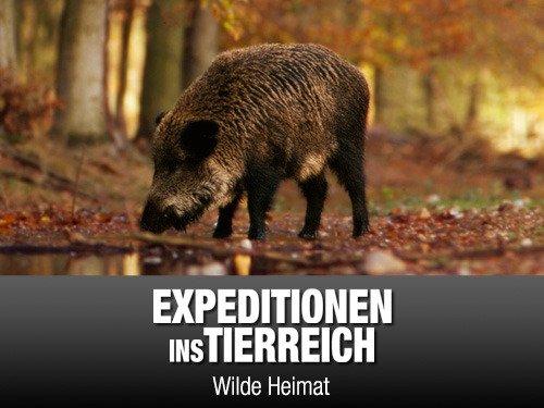 Amazon De Expeditionen Ins Tierreich Wilde Heimat Ansehen Prime Video