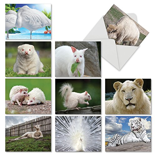 "Note Cards with Envelopes (Mini 4"" x 5 ¼""), All Occasion Greeting Cards with Photos of Uniquely White Animals, Assorted Blank Stationery for Weddings, Birthdays, Thank You #M6447OCB ()"