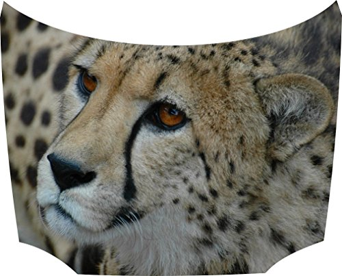 Bonnet Sticker Cheetah: