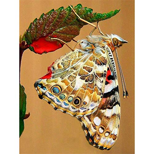DIY 5D Diamond Painting by Number Kit Full Drill Round Rhinestone Embroidery Pictures for Decoration Upside Down Butterfly 11.8 × 15.7in 1 Pack by Loxfir (Amazing Painter Paints A Face Upside Down)