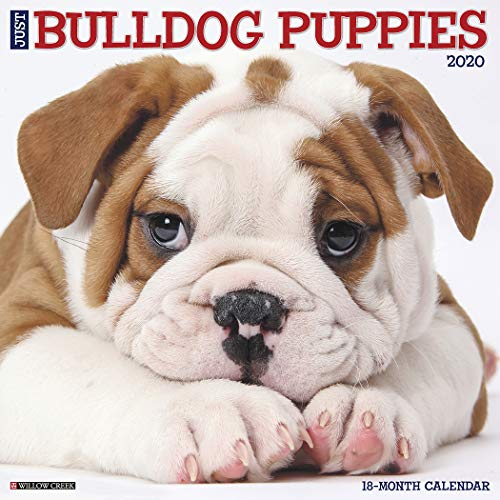 Just Bulldog Puppies 2020 Wall Calendar (Dog Breed -