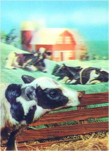 3D Lenticular POSTCARD-FARM HOUSE - Cow Postcard