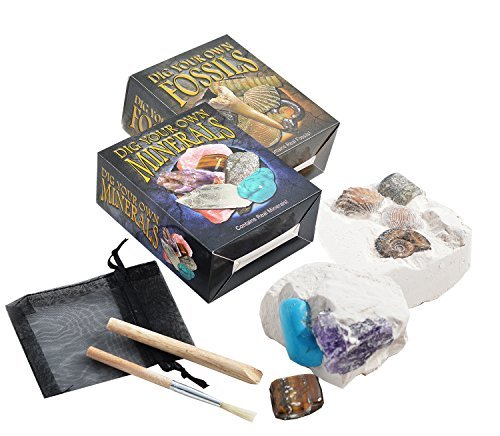 Set of 2 Dig Your Own Fossil & Mineral Kits - Small by Fossil Gift Shop ()