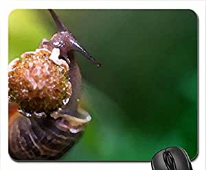 Snail eating a flower Mouse Pad, Mousepad (Watercolor style)