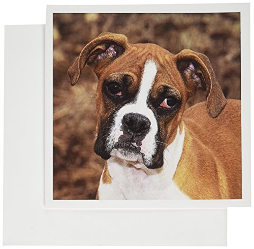 3dRose Greeting Cards, 6 x 6 Inches, Pack of 12, Purebred Boxer Dog - Na02 Pwo0038 (gc_140295_2) (Boxer Dog Greeting Cards)