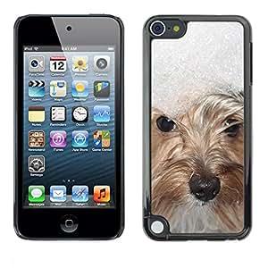 PC/Aluminum Funda Carcasa protectora para Apple iPod Touch 5 Snow Winter West Highland White Terrier / JUSTGO PHONE PROTECTOR