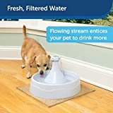 PetSafe Drinkwell 360 Cat and Dog Water Fountain