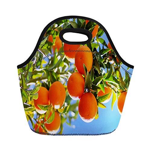 Semtomn Lunch Bags Agriculture Blue Orchard Ripe Oranges on Branch Green Acid Neoprene Lunch Bag Lunchbox Tote Bag Portable Picnic Bag Cooler Bag