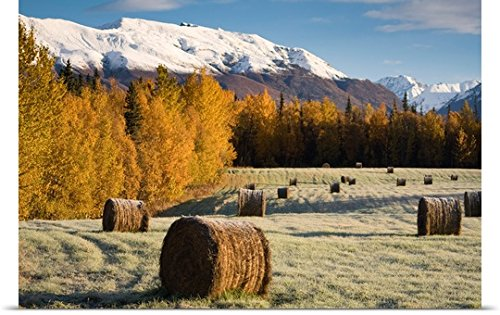 Great BIG Canvas Poster Print entitled Frost clings to bails of hay in a field near Palmer, Alaska on an early Autumn (Bail Hay)