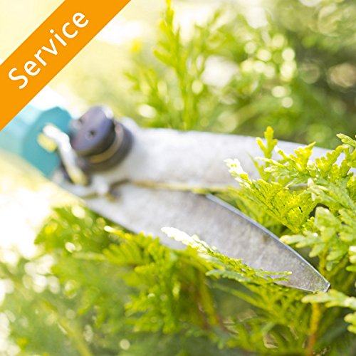 Shrub or Hedge Trimming - 1 to 2 Shrubs