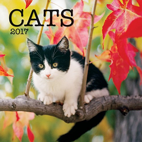 Turner Photo 2017 Cats Photo Mini Wall Calendar, 7 x 14 inches Opened (17998950002)