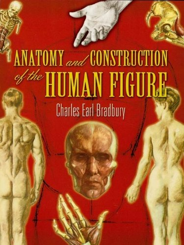 Anatomy and construction of the human figure dover art anatomy and construction of the human figure dover art instruction by bradbury fandeluxe Gallery