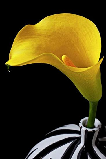 Amazon.com: Purple Verbena Art Yellow Calla in Black and White Vase ...