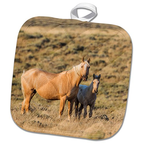 3dRose Danita Delimont - Horses - Wyoming, Sweetwater County, Red Desert, Palomino mare and her foal. - 8x8 Potholder (phl_260626_1) (Wash Sweetwater)