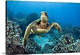 Dave Fleetham Premium Thick-Wrap Canvas Wall Art Print entitled Hawaii, Green Sea Turtle (Chelonia Mydas) An Endangered Species 48''x32''