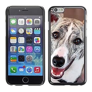 TopCaseStore / la caja del caucho duro de la cubierta de protección de la piel - Greyhound Whippet Dog Racing Pet - Apple iPhone 6 Plus 5.5