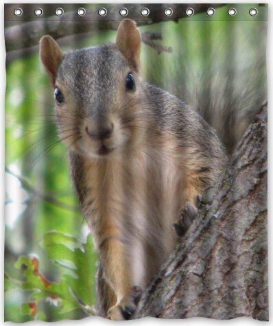 Top Design Cute Squirrel Shower Curtain 60quotw X 72quoth