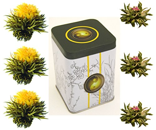6er-Dose Weißtee-Teeblumen