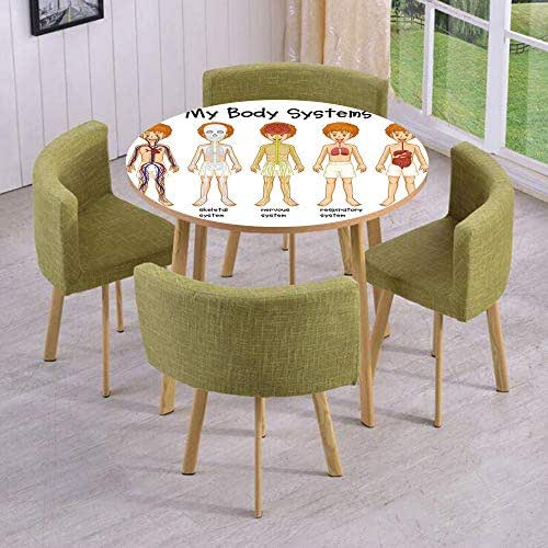iPrint Round Table/Wall/Floor Decal Strikers/Removable/Different Systems in Human Nervous Skeletal Digestive Body Anatomy Young Kids/for Living Room/Kitchens/Office Decoration