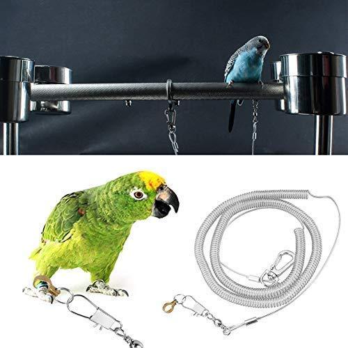 HEEPDD - Correa para pájaros (6 m, antimordeduras), Color Gris ...