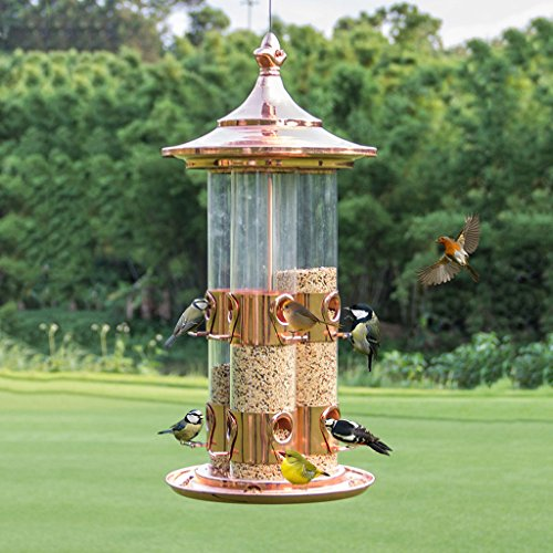 Proof Squirrel Flowers (Wild Feeder Gardening Garden Bird Supplies Outdoor Releasing Stocking Birds And Perfect For Bird Watching For Bird Lover. Cacoffay)