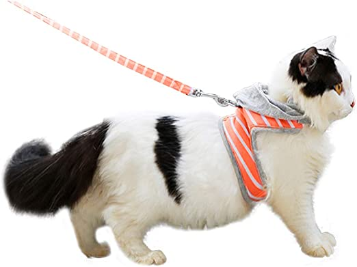 HEEPDD Arnés para Gatos, Ajustable A Prueba de Fugas Gato para Caminar Arnés Kitty Rayas Chaleco con Capucha y Correa Juego para Gatos y Mascotas pequeñas (Naranja s): Amazon.es: Hogar
