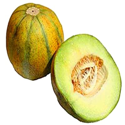 Bravet Fruit Seeds - 20pcs Cantaloupe Seeds Delicious Melon Seeds Home Garden Plants Fruit Seeds: Clothing