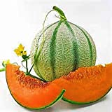 "10+ Charentais, ""NON~GMO"" French Heirloom Cantaloupe~Melon Seeds, Juicy & Sweet."