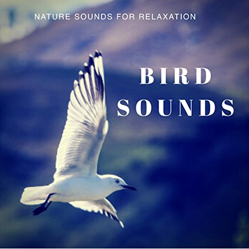 - Bird Sounds -The Sounds Of Nature For Relaxation
