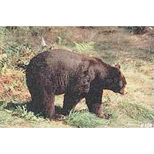 Delta Tru-Life Paper Targets - Bear (Bear Target)