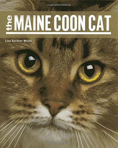 Largest Maine Coon Cat - The Maine Coon Cat