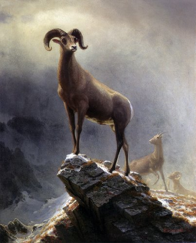 Albert Bierstadt A Rocky Mountain Sheep - 20.05