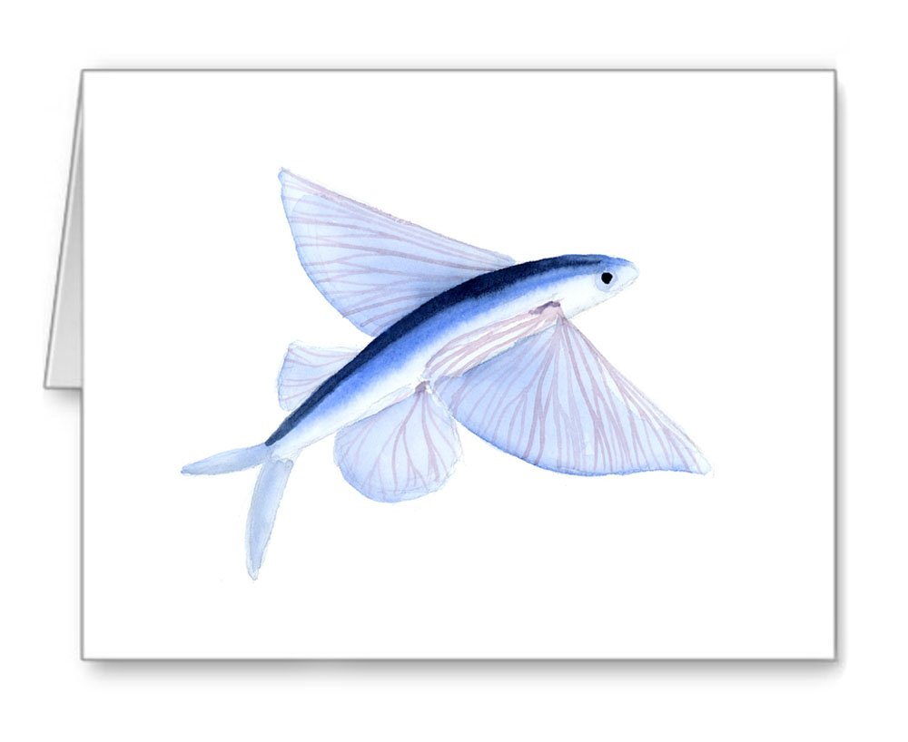 Amazon Flying Fish Set Of 10 Note Cards With Envelopes