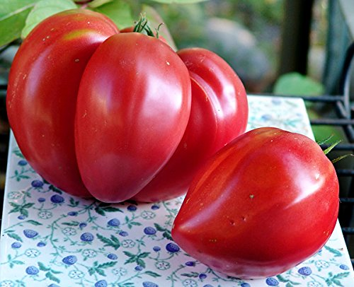 Orange Sweet Tomatoes - 50+ ORGANICALLY GROWN GIANT 2LBS Pink Oxheart Tomato Seeds, Heirloom NON-GMO, Early, Orange, Sweet, Low Acid, Indeterminate, Open-Pollinated, Delicious, From USA