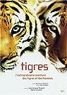 Tigres par Matignon
