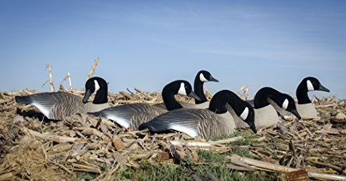 Higdon Outdoors Canada Full-Size Half Shell Hunting Decoys by Higdon Outdoors (Image #3)