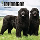Newfoundlands Dogs Wall Calendar 2018 {jg} Best Holiday Gift Ideas - Great for mom, dad, sister, brother, grandparents, , grandchildren, grandma, gay, lgbtq.