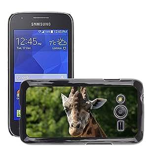Etui Housse Coque de Protection Cover Rigide pour // M00109453 Jirafa Animal Zoo África Corbata // Samsung Galaxy Ace4 / Galaxy Ace 4 LTE / SM-G313F