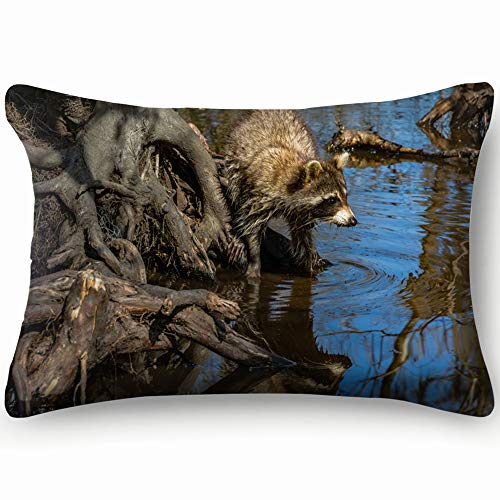 best bags Louisiana Bayou Raccoon Procyon Lotor Seating Nature Throw Pillow Case Cushion Cover Double Side Design 20