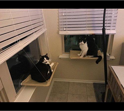 La ventana de la cama del gato montada con la ventosa fuerte y el cable inoxidable sostienen hasta 20KG: Amazon.es: Productos para mascotas